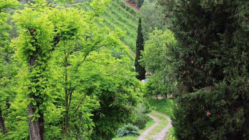 Cottage stone Bel Sole Tuscany Siena 26