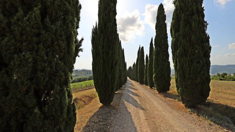 Hillside stone built Villa Insieme XII Tuscany Siena 4