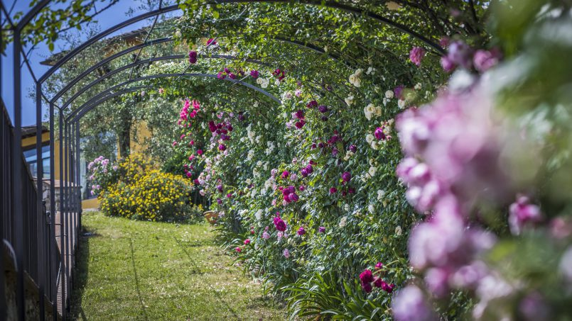Hillside country house Villa il Roseto Tuscany Casalguidi 59
