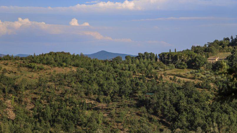 Hillside stone built La Ripa Tuscany Belforte 39